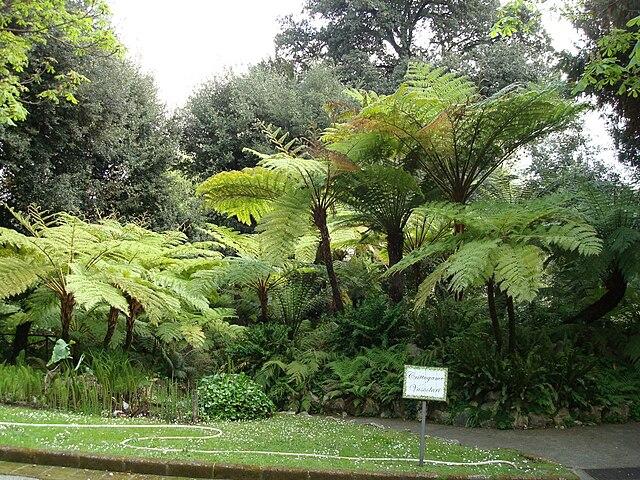 Collection de Cryptogames vasculaires au Jardin botanique de Naples. Photo de Cymbella.