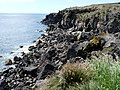 Otaries au pied des falaises - panoramio.jpg