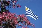 flaga Urugwaju na tle wiosny (Puchowiec wspaniały)