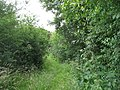 Overgrown path to the Amlwch road - geograph.org.uk - 883259.jpg