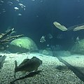 Ozeaneum Stralsund 001.jpg