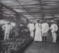 Pépinière au Jardin Botanique d'Eala, 1909.png