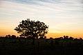 Pôr do sol no cerrado 05.jpg