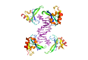 ADP-ribosylation - Crystal structure of PARP1 zinc finger domain bound to DNA (purple). PDB: 4AV1