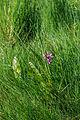 PR Hluboký rybník 30.jpg