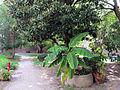 Palazzo paradiso, giardino 01.JPG