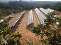 Pannelli solari nel Bosco di Policoro.jpg