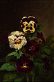 Pansies-John Williamson-1862.jpg