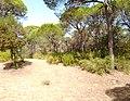Parque de Doñana 20210610 63.jpg