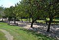 Passeig del parc de Benicalap, València.JPG
