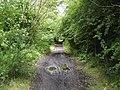 Path in Newshot Island Local Nature Reserve - geograph.org.uk - 501646.jpg