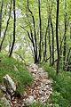 Path near Slap Boka.jpg