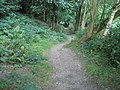 Path through Rectory Wood - geograph.org.uk - 1449047.jpg