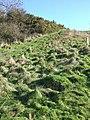 Path up Crimson Hill - geograph.org.uk - 354053.jpg