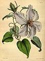 Paxton's flower garden (Plate 94) (9256197852).jpg