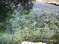 Peacock Springs SP spring II02.jpg