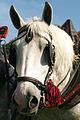Percherons attelés mondial du cheval percheron 2011Cl J Weber21 (23455203734).jpg