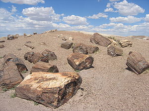 Photo of petrified wood at Petrified Forest Na...