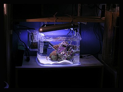 reef aquarium wikipedia the free encyclopedia reef tank 400x301