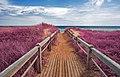 Pink Beach Boardwalk (10683021643).jpg