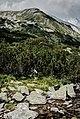 Pirin-2014-HvojnatiVrah01.jpg