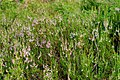 Plant 97 (31615002183).jpg