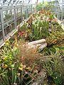 Plantes carnivores à Lyon.jpg