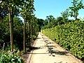 Plantsman's Walk - geograph.org.uk - 204730.jpg