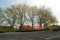 Platanen op het terrein van de Brouwerij Alken , vml. retraitehuis van de Jezuïeten - 371826 - onroerenderfgoed.jpg
