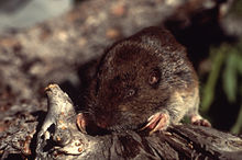 Gopher - Wikipedia