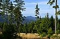 Pohled na horu Ostrý - Šumava - panoramio.jpg