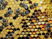 Verschillende soorten opgeslagen stuifmeel in een bijenraat