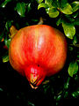 Pomegranate (6959083028).jpg