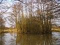Pond near Green Lane Farm - geograph.org.uk - 1753233.jpg
