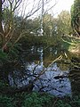 Pond near Sands House - geograph.org.uk - 295736.jpg