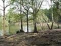 Pond on Higbirch Hill - geograph.org.uk - 415233.jpg