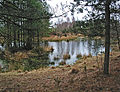 Pond on Mogshade Hill, New Forest - geograph.org.uk - 169531.jpg