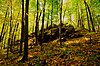 Powers Bluff Maple Woods.jpg