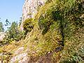 Pozzine de pente, Corse-du-Sud.jpg