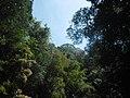 Prašuma, provincija Ratanakiri, Kambodža.jpg