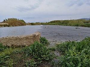 Presa del río Júcar cerca de Fortaleny con maleza.jpg