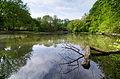 Prospect Park New York May 2015 008.jpg