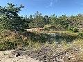 Provincetown Coastal Pine Barrens.jpg