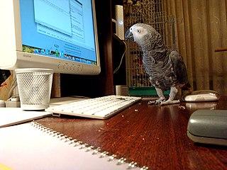 Papagáj ako domáci miláčik