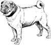 Pug 2 (PSF).png