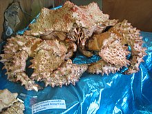 Puget Sound King Crab (2917034985).jpg