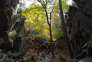English: A view of Purgatory Chasm in Sutton, MA.