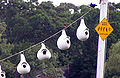 Purple martin colony.jpg