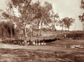 Queensland State Archives 2472 Sheep on bridge at Yandilla 1898.png