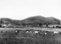 Queensland State Archives 4339 Mixed farming Killarney South West Queensland c 1930.png